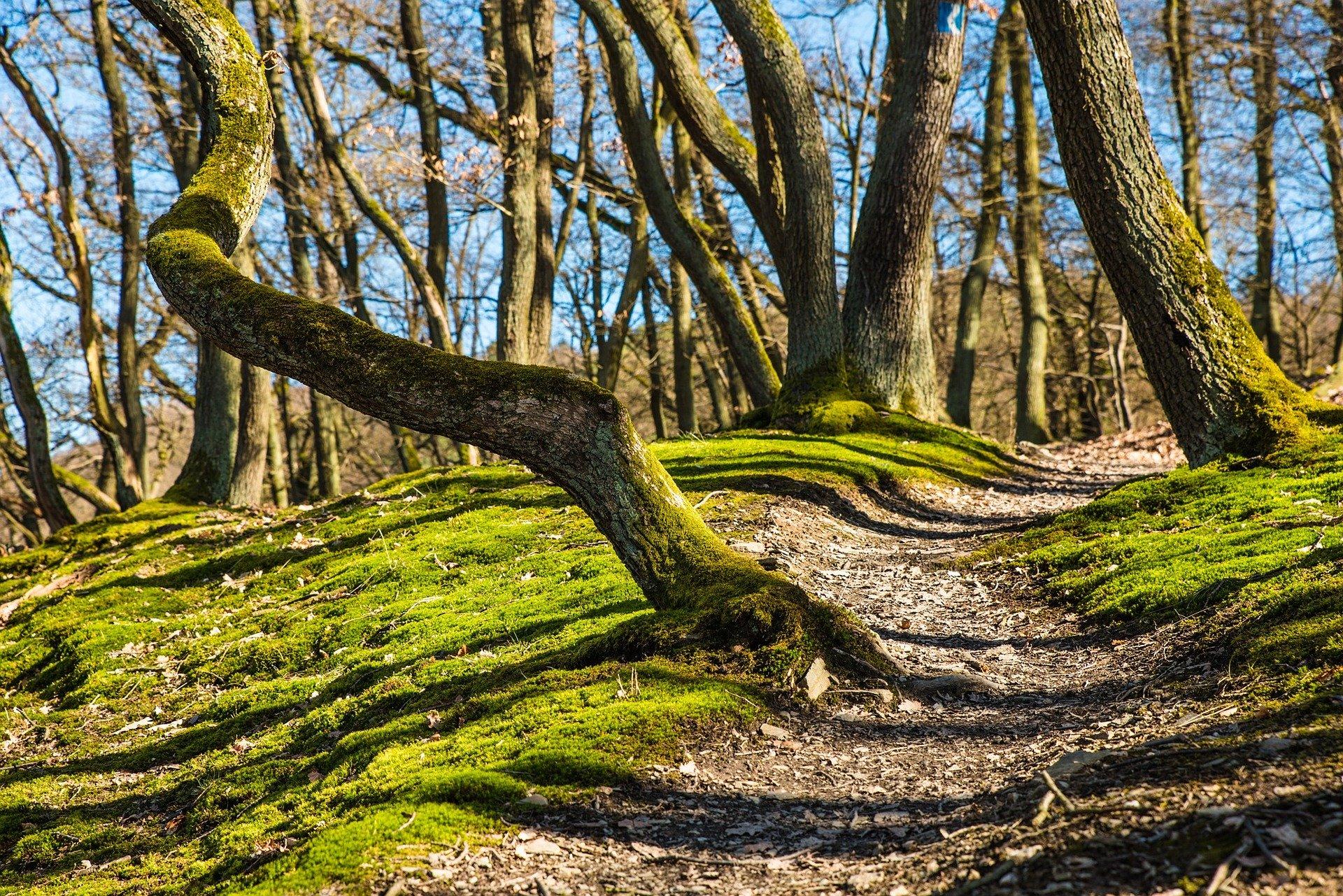 Сильвотерапия, - или как деревья заботятся о нас.